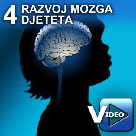 razvoj_mozga_djeteta_V